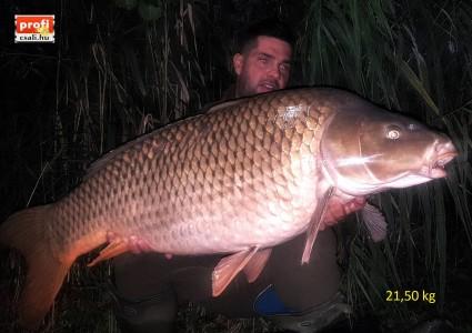 21,50 kg Natural