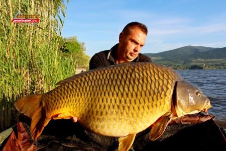22,40 kg natural