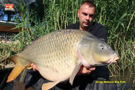46. 22 kg natural másolata