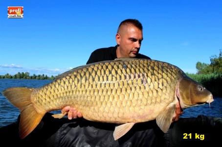 Feri 21 kg 2017