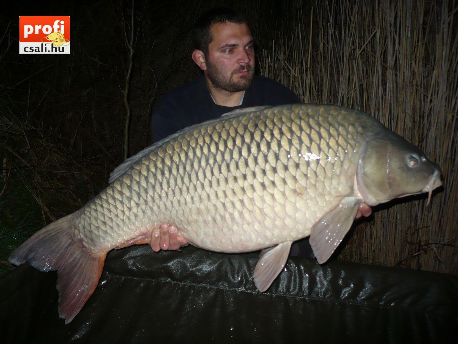 hatvani horgásztó