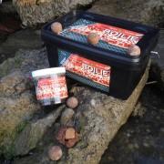 1 Kg Hot Spice Oyster - Csípős, Fűszeres, Osztrigás ízű Bojli