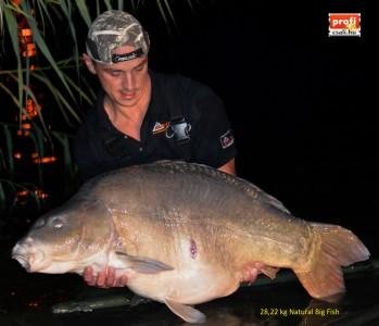 Csaba 28 kg